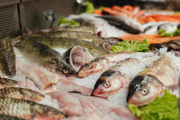 Close up of a raw fish in a showcase Stock photo © deandrobot