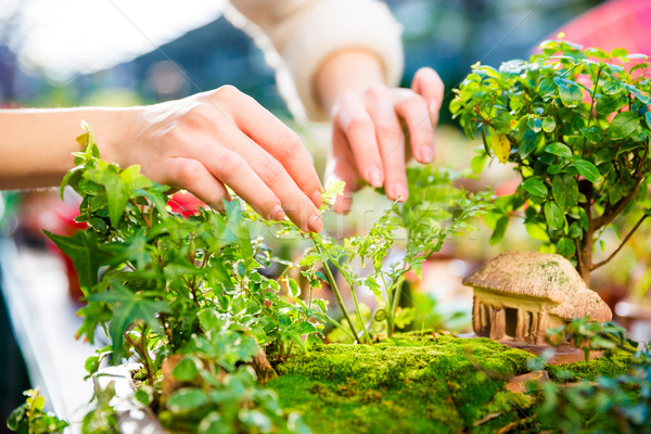 Closeup of mini garden with small trees and house  Stock photo © deandrobot