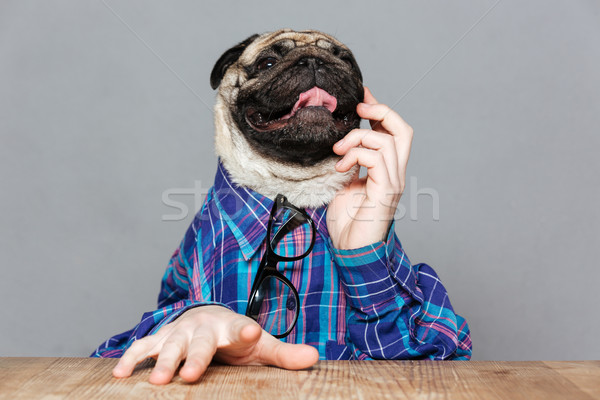 Pensive pug dog with man hands sitting and thinking Stock photo © deandrobot