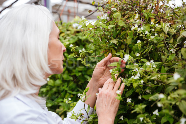 Side view of mature woman working in greenhouse Stock photo © deandrobot