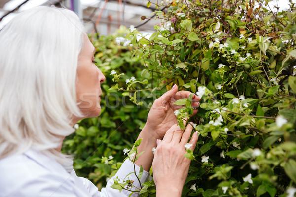 Widok z boku starsza kobieta pracy szklarnia dojrzały piękna kobieta Zdjęcia stock © deandrobot