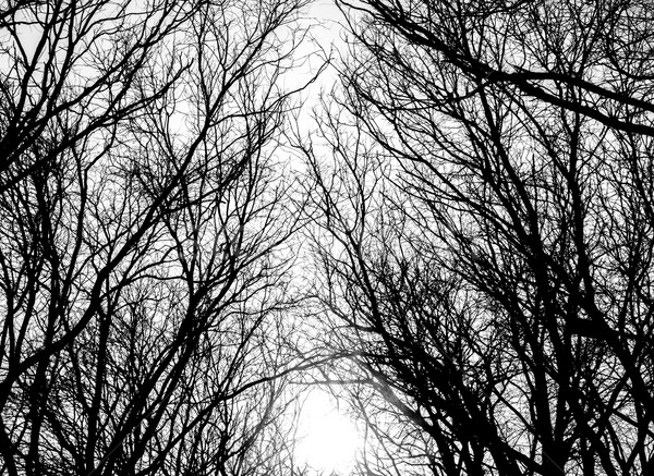 Tree branches Stock photo © deandrobot
