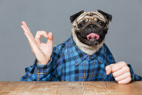 Man with pug dog head sitting and showing ok sign Stock photo © deandrobot
