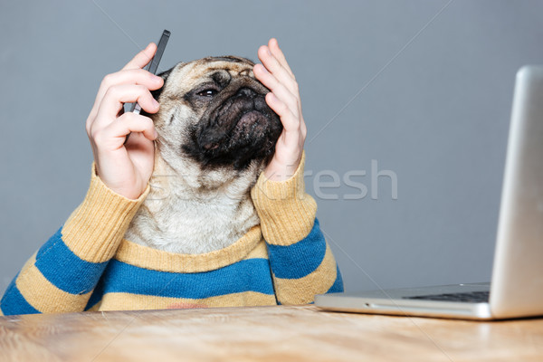 Pensive desperate pug dog with man hands using smartphone  Stock photo © deandrobot
