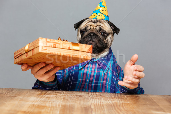 Surprised man with pug dog head holding present box Stock photo © deandrobot