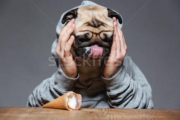 Sad man with pug dog head droped down ice-cream  Stock photo © deandrobot