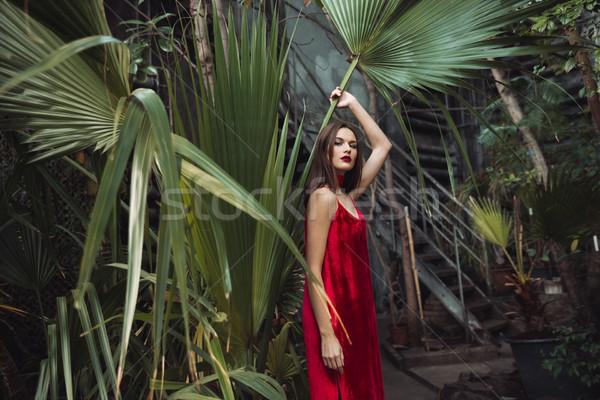 Modelo invernadero planta vestido rojo posando flor Foto stock © deandrobot
