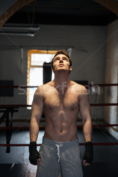Young boxer looking up at light Stock photo © deandrobot