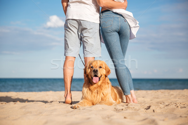 Back view of dog lying on beach near young couple Stock photo © deandrobot
