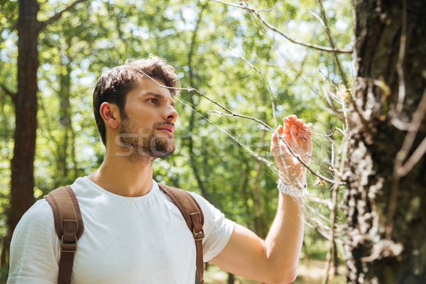 Man standing and looking at spider web in forest Stock photo © deandrobot