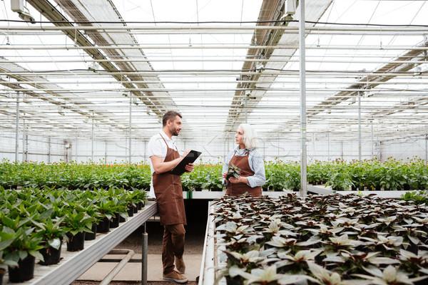 Beszél növények üvegház férfi érett nő üzlet Stock fotó © deandrobot