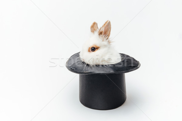 Rabbit in a hat Stock photo © deandrobot