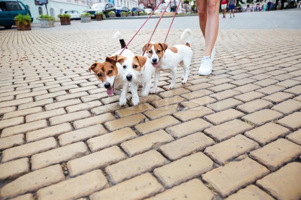 Image femme chiens marche rue de la ville chien Photo stock © deandrobot