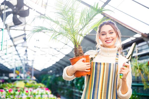Sonriendo femenino jardinero pequeño palma Foto stock © deandrobot