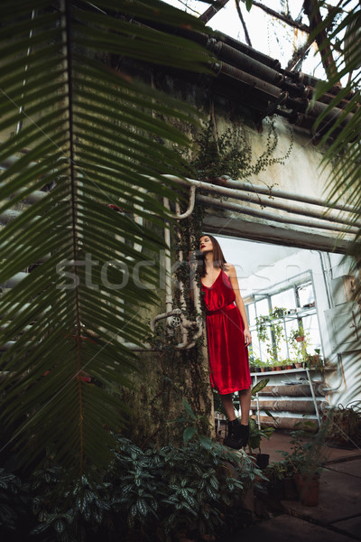 Full length image of woman in greenhouse Stock photo © deandrobot