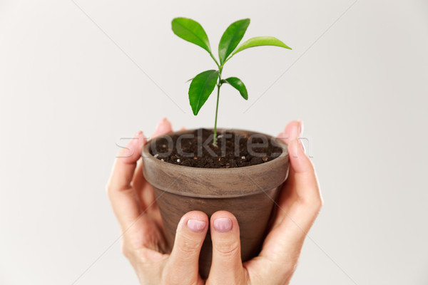Cropped photo of womans hands holding brown pot with young plant Stock photo © deandrobot