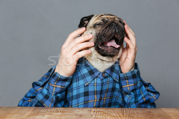 Desperate sad pug dog with man hands sitting and crying Stock photo © deandrobot