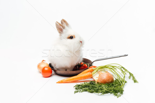 Rabbit inside a frying pan and vegetables Stock photo © deandrobot