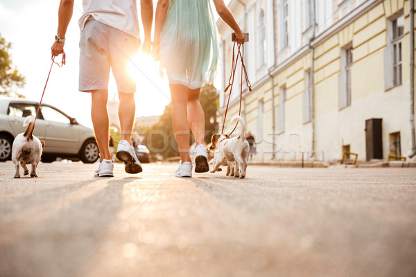 Friendly couple walking dogs together on the city street Stock photo © deandrobot