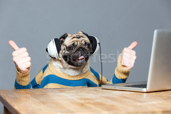 Pug dog with man hands in headphones showing thumbs up  Stock photo © deandrobot