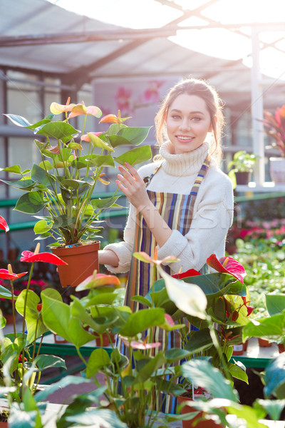 Smiling woman gardener holding flower pot with anthuriums in orangery Stock photo © deandrobot
