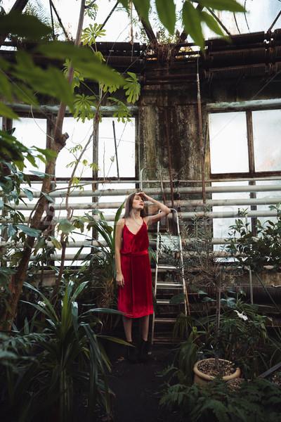 Kobieta szklarnia czerwona sukienka stwarzające Zdjęcia stock © deandrobot