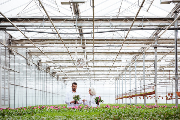 Mature gardeners working in greenery Stock photo © deandrobot