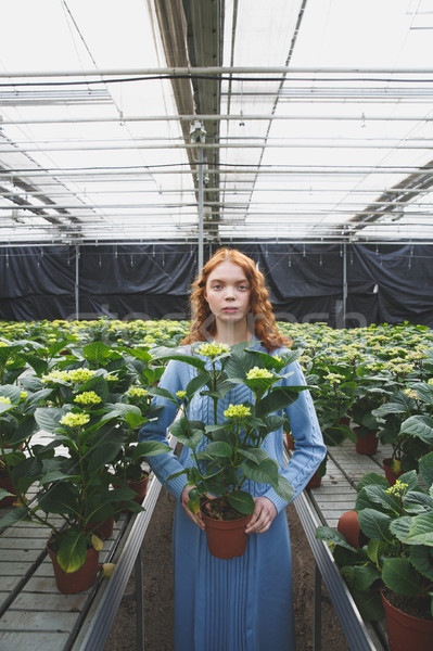 Girl with plant in orangery Stock photo © deandrobot