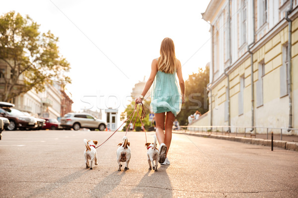 Back view of a young woman walking her dogs Stock photo © deandrobot