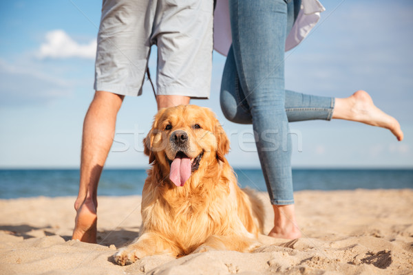 Closeup of beautiful dog lying on the beach Stock photo © deandrobot
