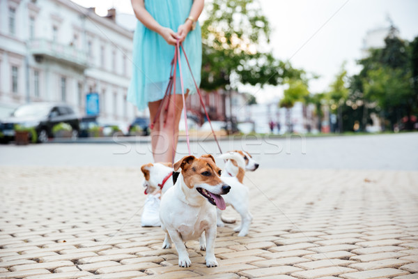 Cropped image of a woman and her dogs during walk Stock photo © deandrobot