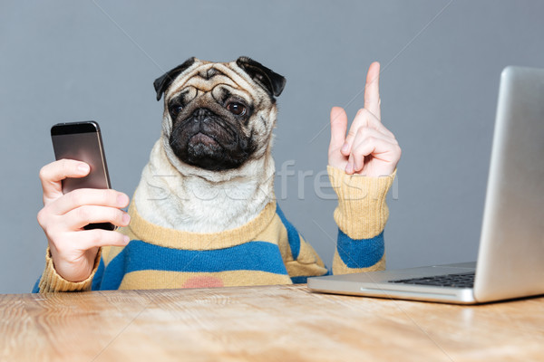 Dog with man hands using mobile phone and pointing up  Stock photo © deandrobot