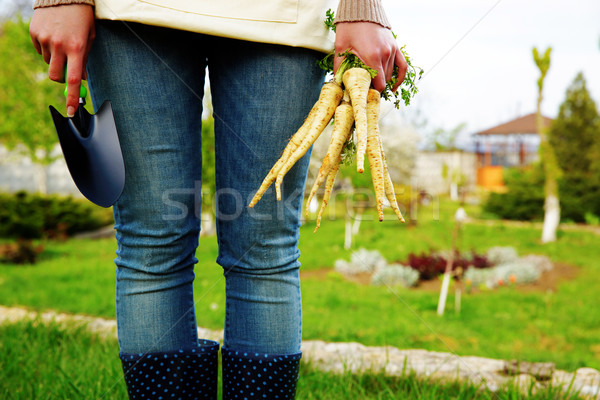 Midsection of woman holding bunch of freshly harvested vegetables and a hoe in garden Stock photo © deandrobot