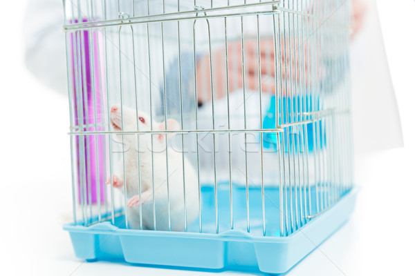 Rat in chemist laboratory Stock photo © deandrobot