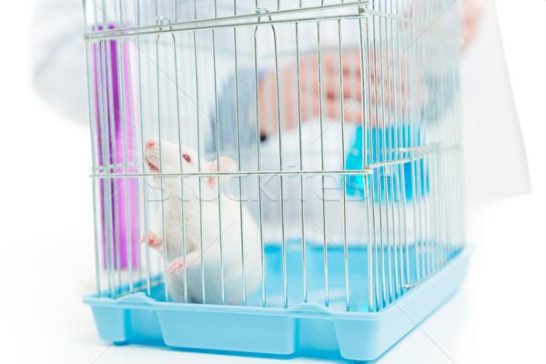 крыса химик лаборатория портрет медицинской Сток-фото © deandrobot