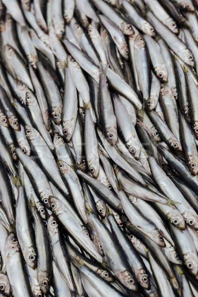Pile of sprats Stock photo © deandrobot
