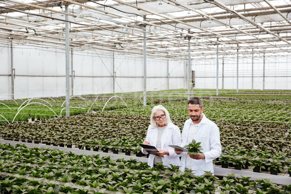Serious workers in garden looking and touching plants Stock photo © deandrobot