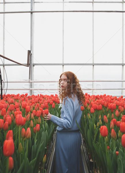 Lány sétál tágas piros tulipánok virág Stock fotó © deandrobot