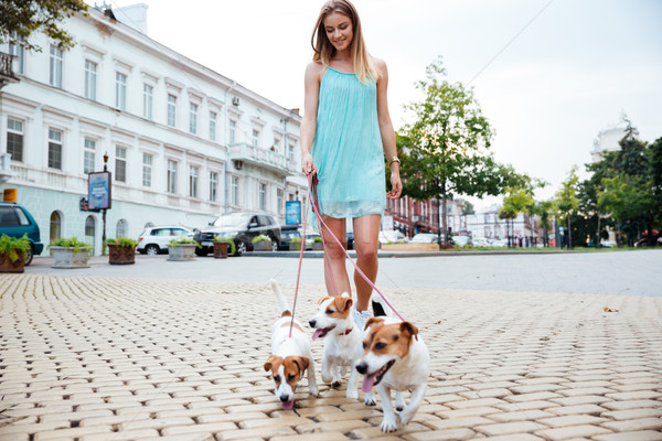 Woman in blue dress taking her dogs for a walk Stock photo © deandrobot