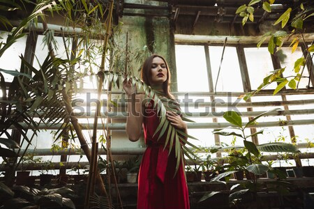 View from below of woman in greenhouse Stock photo © deandrobot