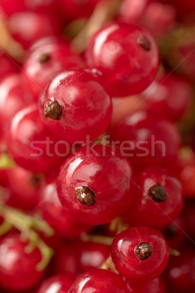 красный смородина Ягоды макроса фотография Сток-фото © deandrobot