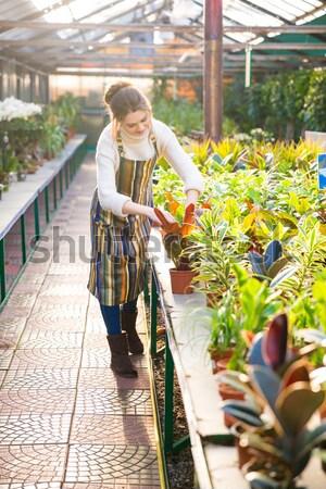 Nő kertész dolgozik elvesz törődés virágok Stock fotó © deandrobot