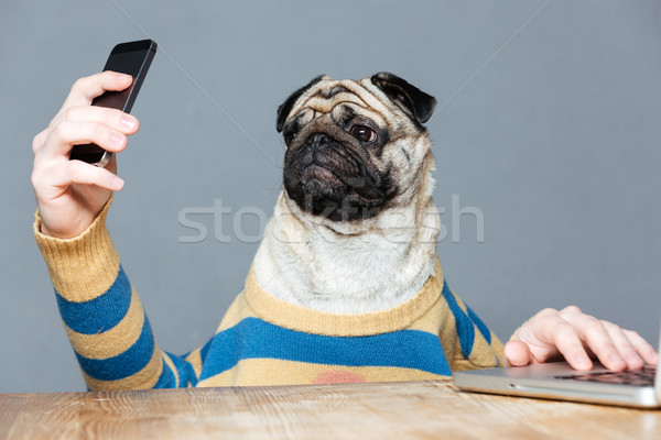 Amusing pug dog with man hands using smartphone  Stock photo © deandrobot