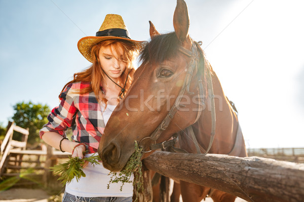 Beautiful woman cowgirl taking care and givivn food to horse Stock photo © deandrobot
