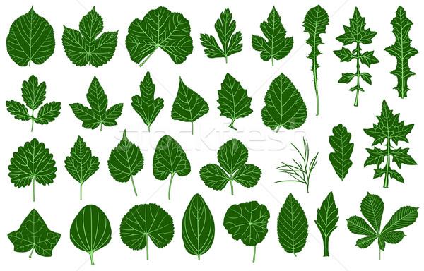 Ilustración diferente hojas aislado blanco primavera Foto stock © DeCe