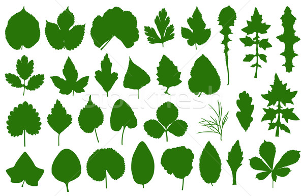 Set of different leaves  Stock photo © DeCe