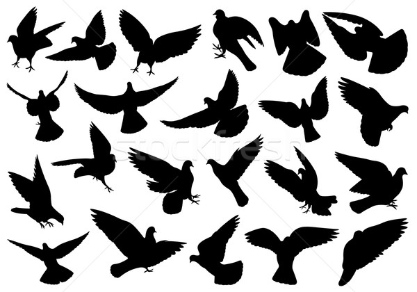 Ingesteld verschillend geïsoleerd witte vogel Stockfoto © DeCe