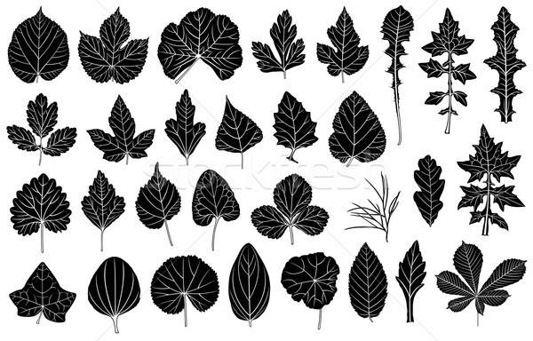 Establecer diferente hojas aislado blanco primavera Foto stock © DeCe