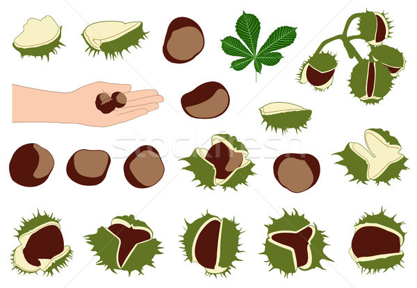 Set of different horse chestnuts  Stock photo © DeCe