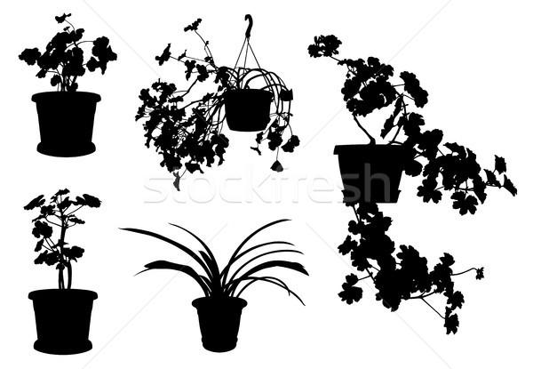 Establecer diferente flores aislado blanco jardín Foto stock © DeCe